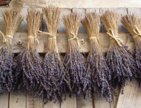 Lavender natural medicine